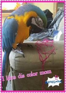 Blue Chicken, Blue and gold macaw, macaw, parrot, crochet